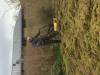 Vertikalskæring af græsplæne