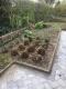 Vedligeholdelse af have